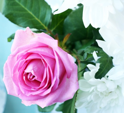 A photo of a pink rose